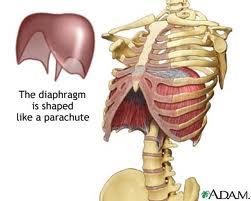 Diaphragm 3