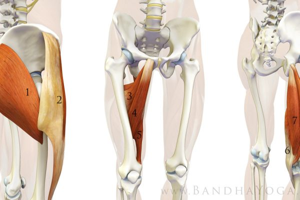 Hip Stabilizers