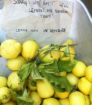Lemon poppy seed basil